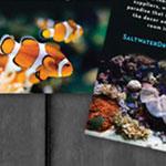 Saltwater Dreamscapes Logo, Letterhead, Business Card Design